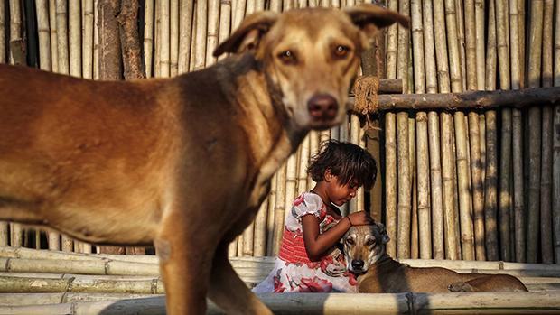 Menina com seus cachorros em um mercado de Mumbai, na Índia