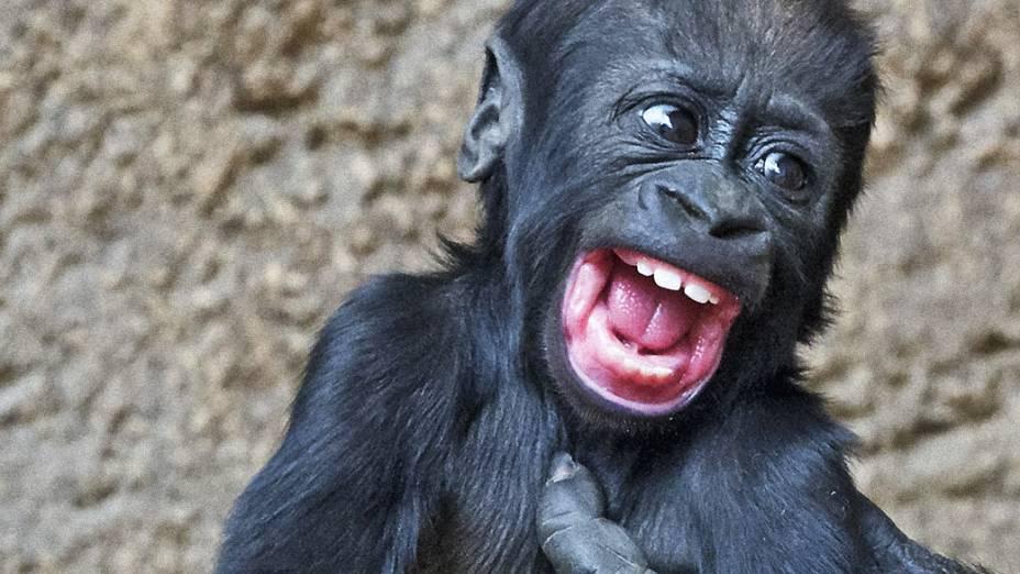 Bebê gorila Jengo brinca com sua mãe Kumili no zoológico de Leipzig, na Alemanha