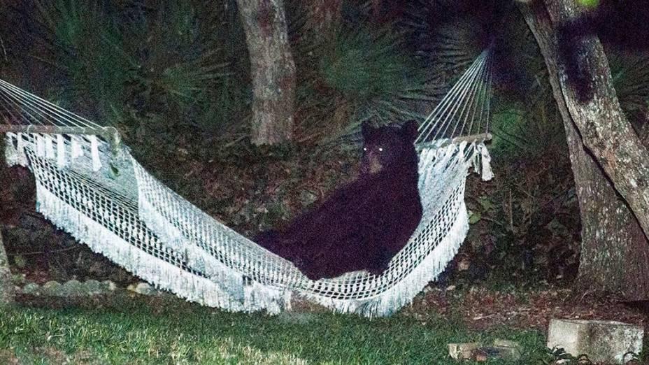 Um urso-negro é visto deitado em uma rede de uma casa em Daytona Beach, Flórida