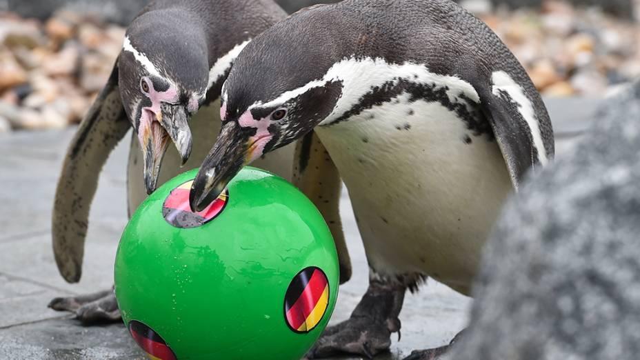 Pinguins brincaram com bola em um aquário no distrito de Brandenburg, Alemanha