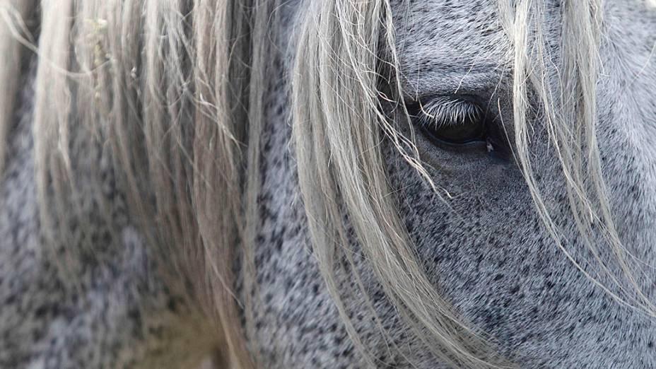"""Um cavalo selvagem é visto durante a """"Rapa das Bestas"""" evento tradicional na aldeia de Sabucedo, noroeste da Espanha"""