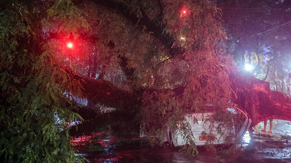 O passageiro de um táxi morreu após o veículo ser atingido por uma árvore em São Paulo. O acidente aconteceu na esquina das ruas Alagoas e Itacolomi, no bairro de Higienópolis