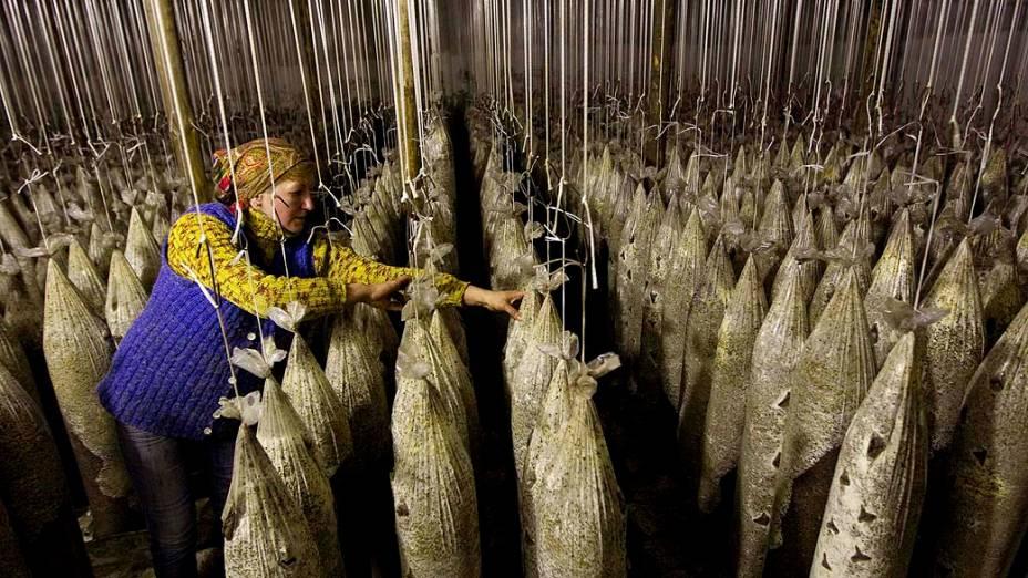 Funcionária em estufa de cogumelos localizada em uma ex-base militar soviética, na aldeia de Minoity, Bielorrússia
