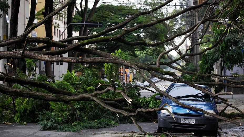 Árvore cai e atinge veículo na região do Morumbi na zona oeste de São Paulo durante temporal