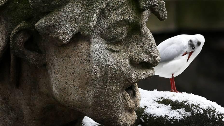 Gaivota é fotografada próxima a uma estátua em Dusseldorf, na Alemanha