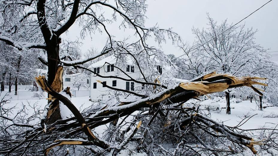 Tempestade de neve atinge centro-oeste dos EUA. Neve pesada derrubou galhos em Merriam, Kansas