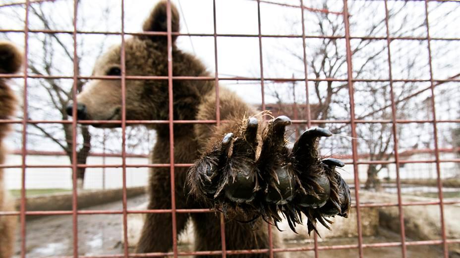 Polícia apreende leões e ursos em casa de gangster da Romênia