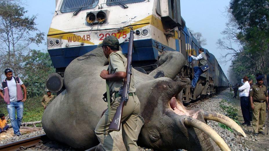 Elefante morre após ser atropelado por um trem na reserva florestal Buxa, a 12 km de Alipurduar, em Bengala Oeste, na Índia