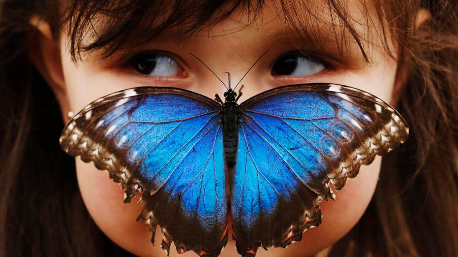 Stella Ferruzola, 3, posa com uma borboleta da espécie Morpho em seu nariz na exposição Sensational Butterflies no Museu de História Natural de Londres