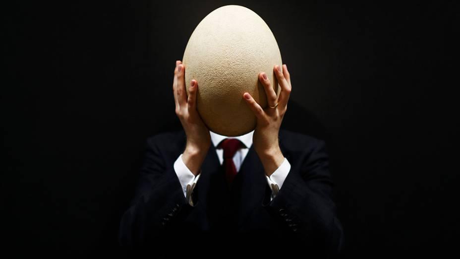 Funcionário do famoso leilão Christies, em Londres, exibiu um raro ovo subfossilizado de um pássaro-elefante de Madagascar, nesta quarta-feira (27). Cem vezes maior que um ovo de galinha, ele pertence à maior ave que já existiu, hoje extinta, medindo cerca de 11 metros