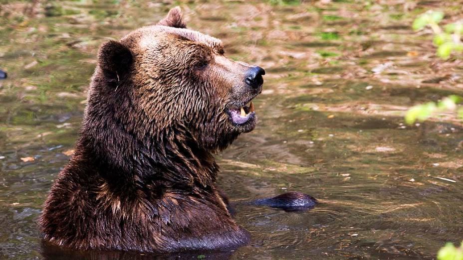 Urso marrom em abrigo criado para animais que sofreram maus tratos, na Alemanha