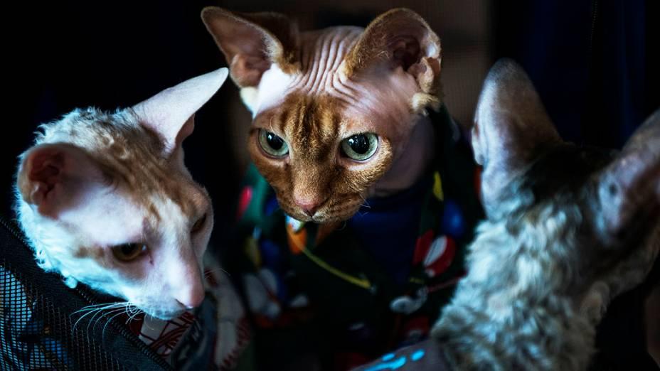 Gatos são vistos durante a BlogPaws. BlogPaws organizou uma conferência para os blogueiros e seus animais de estimação para reunir e conhecer, participar de workshops e produtos, em Tysons Corner, Virginia