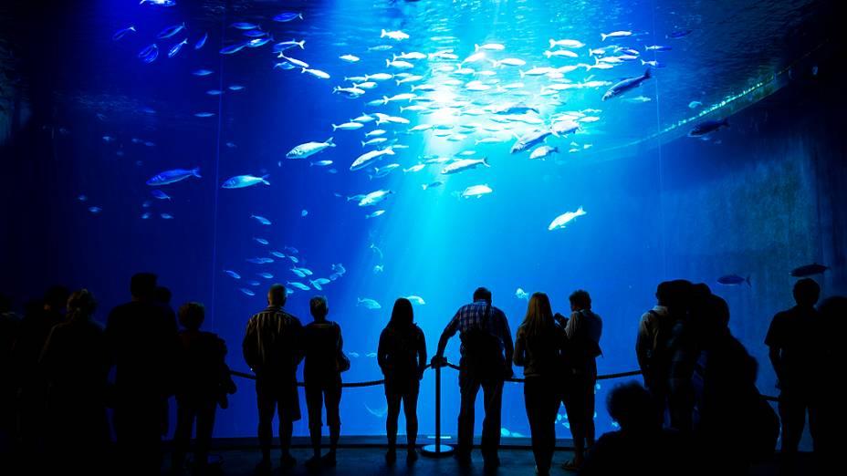 Visitantes observam peixes no Oceanário de Stralsund, Alemanha