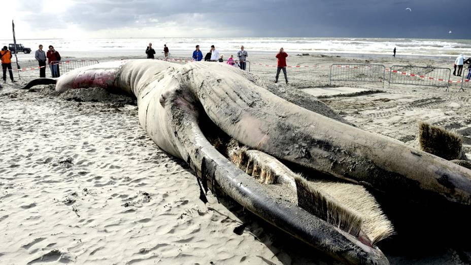 Pessoas olham a carcaça de uma baleia de 6 metros morta na praia de Gravenzande, na Holanda