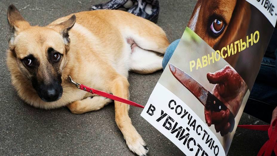 Ativistas participaram de um comício para defender os direitos dos animais abandonados em frente ao Ministério do Interior em Kiev, nesta terça-feira (17)