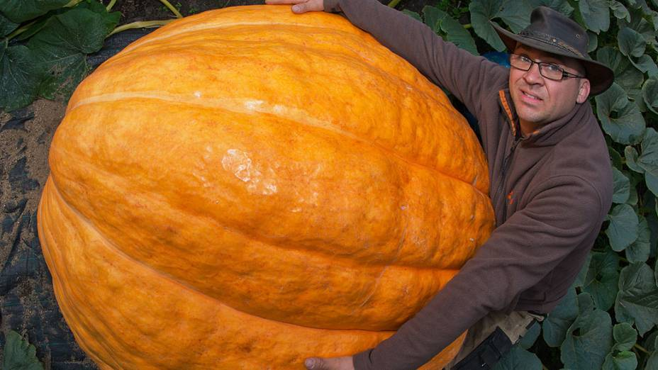 Agricultor Oliver Langheimmostra sua abóbora de 320 kgem seu jardim em Fuerstenwalde, na Alemanha