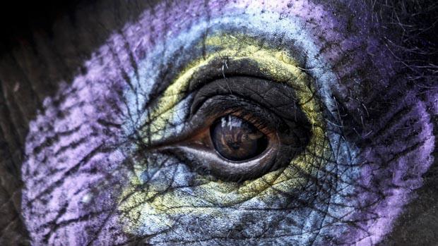 Elefante nas comemorações da semana de vida selvagem na Índia