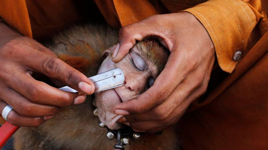 Homem raspa seu macaco com uma navalha antes de executarem Lahore, no Paquistão