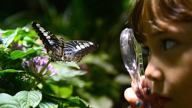 Estudante observa borboleta no Museu de História Natural, em Nova York