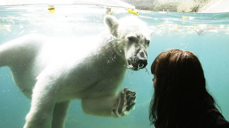 Visitante olha para urso polar Luka em uma piscina no zoológico de Wuppertal, na Alemanha