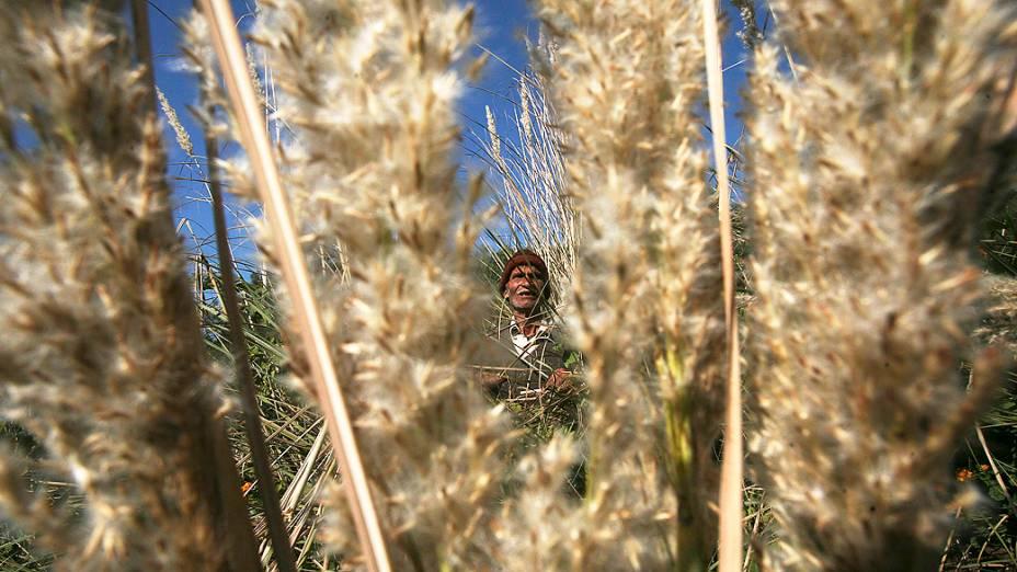 Homem corta grama seca em um campo nos arredores de Jammu, na Índia