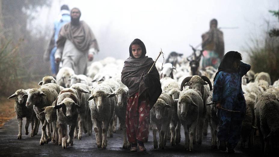 Jovens pastores nômades de Gujjar caminham com seu rebanho em meio à neblina perto de Jammu, na Índia, nesta quinta-feira (19)