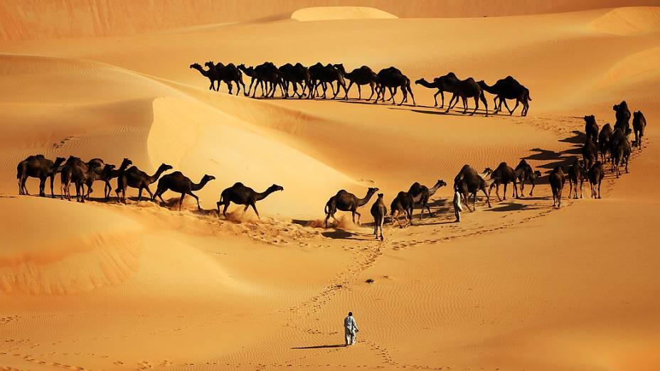 Camelos fotografados em dunas, nos Emirados Árabes