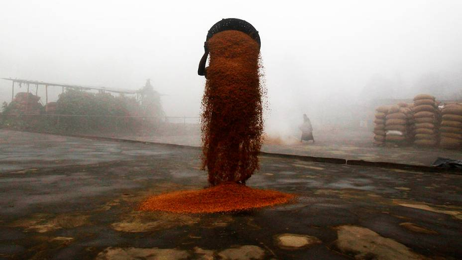 Agricultor espalha arroz colhido para secar em um moinho perto de Agartala, na Índia, nesta quinta-feira (09)