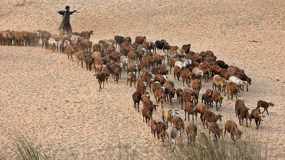 Pastor caminha junto com seu rebanho de cabras nas margens do rio Mahanadi no distrito de Cuttack, na Índia