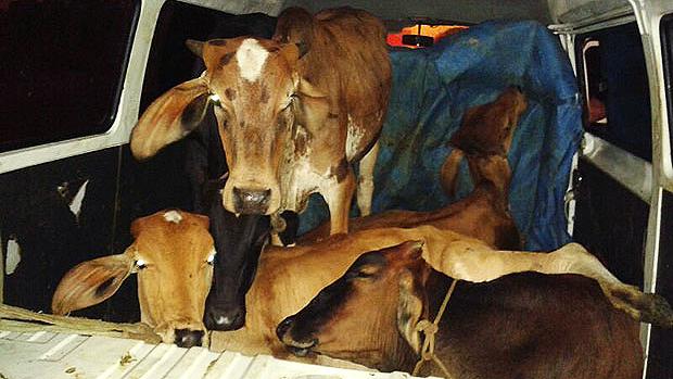 A Polícia Rodoviária Federal de Juiz de Fora, na Zona da Mata, prendeu dois homens que transitavam em uma kombi furtada na BR-040, na manhã desta terça-feira (21). Os suspeitos transportavam quatro vacas e um bezerro com claros sinais de maus tratos