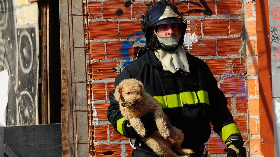 Bombeiro retira um cachorro do incêndio que atingiu a favela do Moinho, na região central de SP