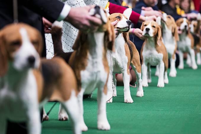 internacional-cachorros-caes-westminster-dog-show-20140210-019-original.jpeg