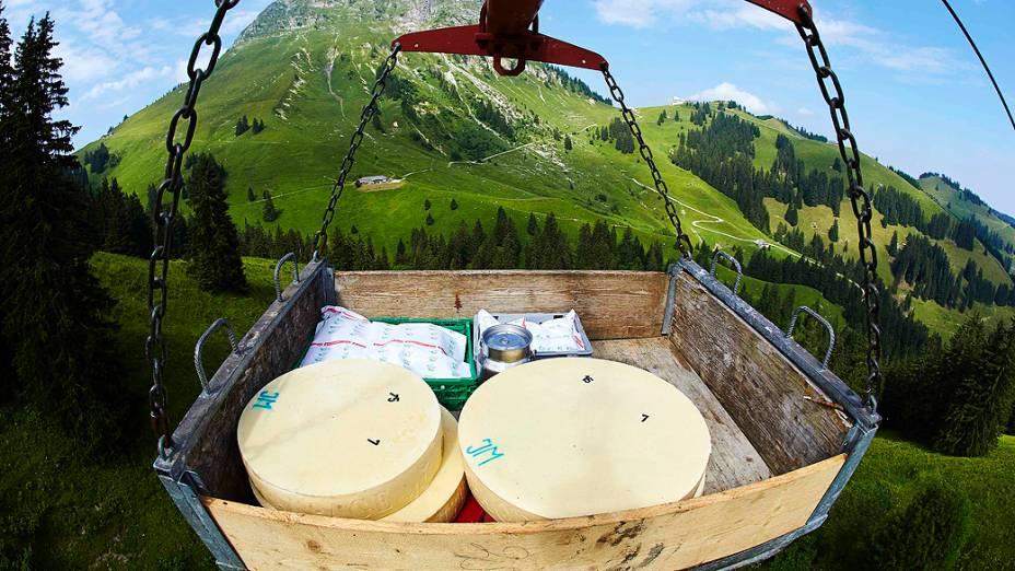 Queijos recém fabricados são transportados por um monotrilho para o porão da fazenda até amadurecer