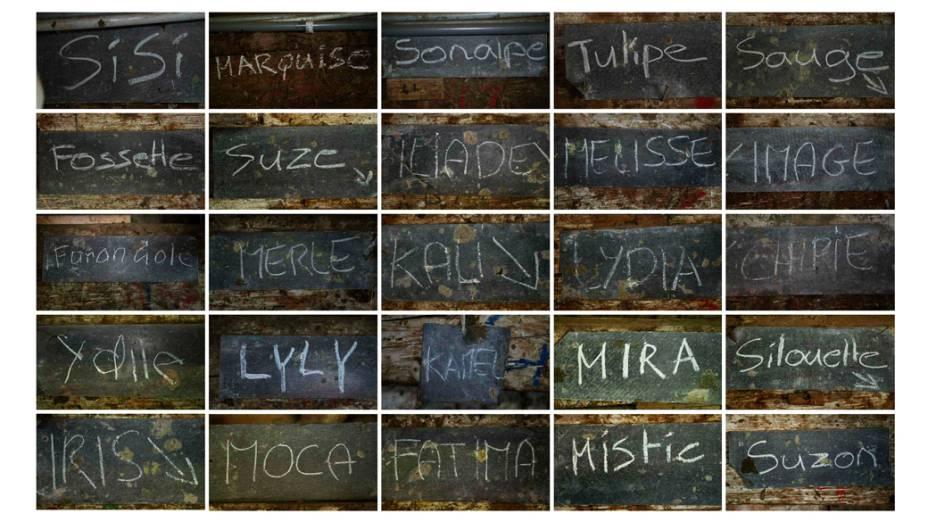Combinação de imagens com os nomes de cada vaca escrito em uma lousa no celeiro