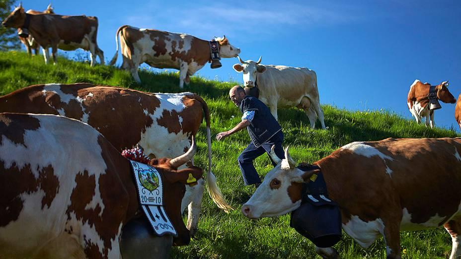 O fazendeiro Jaques Murith reúne as vacas de seu rebanho no primeiro dia da temporada de produção de queijos que começa em maio, em Gruyères, na Suíça