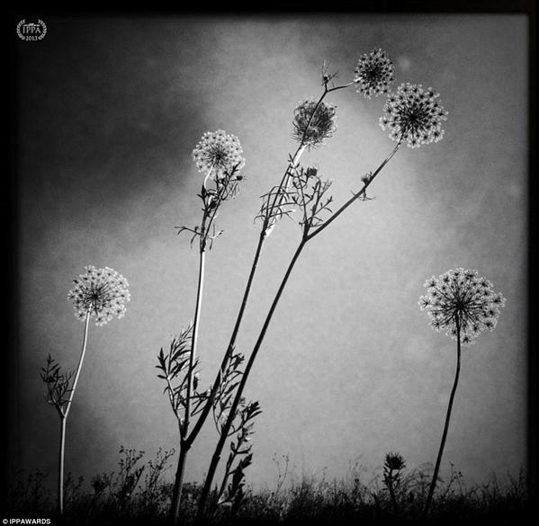 Fotografia de Britta Hershman - Vencedora na categoria: Flores