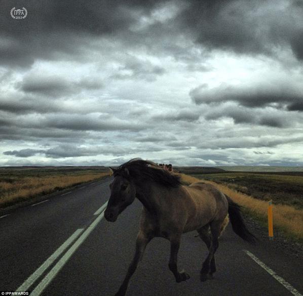 Fotografia de Jon Resnik - Vencedora na categoria: Animais