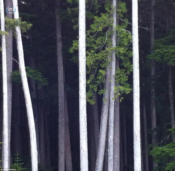 Fotografia de Mark Simone - Vencedora na categoria: Árvores