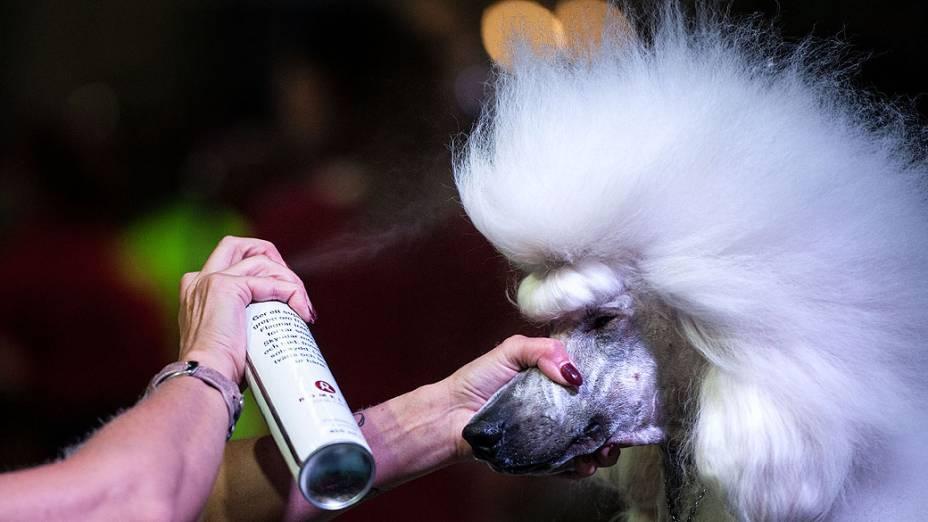 Participante com seu animal de estimação durante o Dog World Team Championships Grooming, em Barcelona, na Espanha