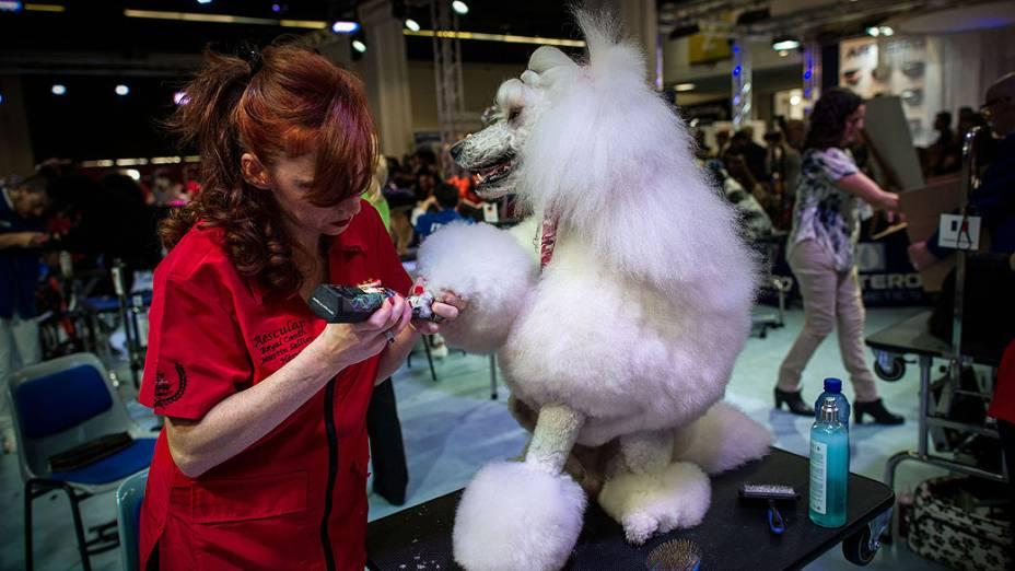 Cão é preparado para o Dog World Team Championships Grooming, em Barcelona, na Espanha