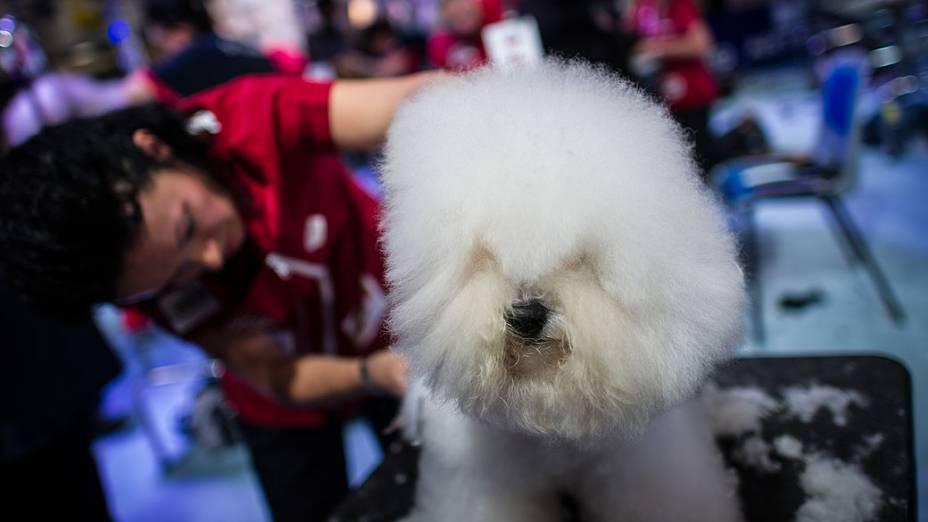Dezessete países participaram do Dog World Team Championships Grooming, em Barcelona, na Espanha