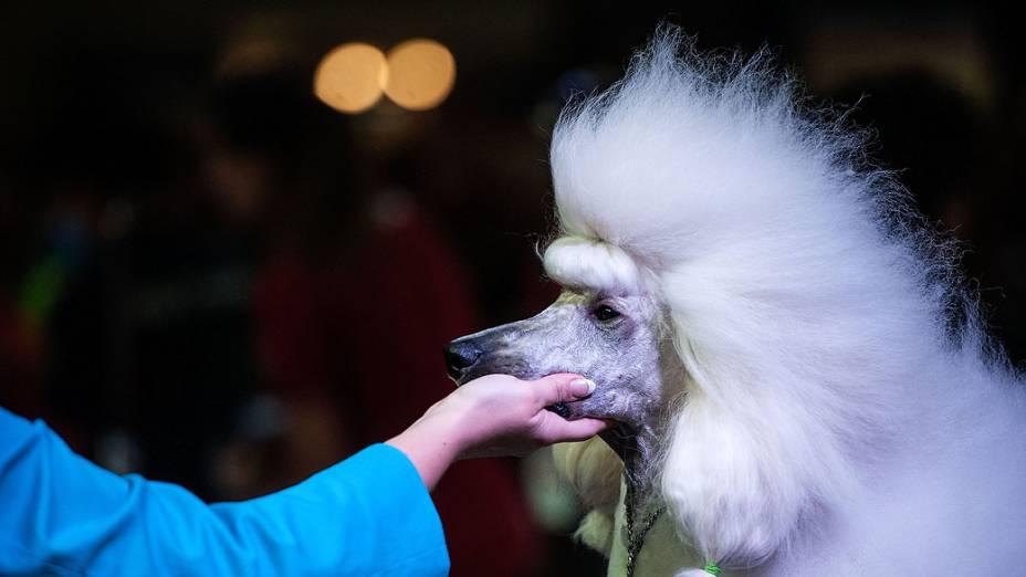 Participante durante o Dog World Team Championships Grooming, em Barcelona, na Espanha