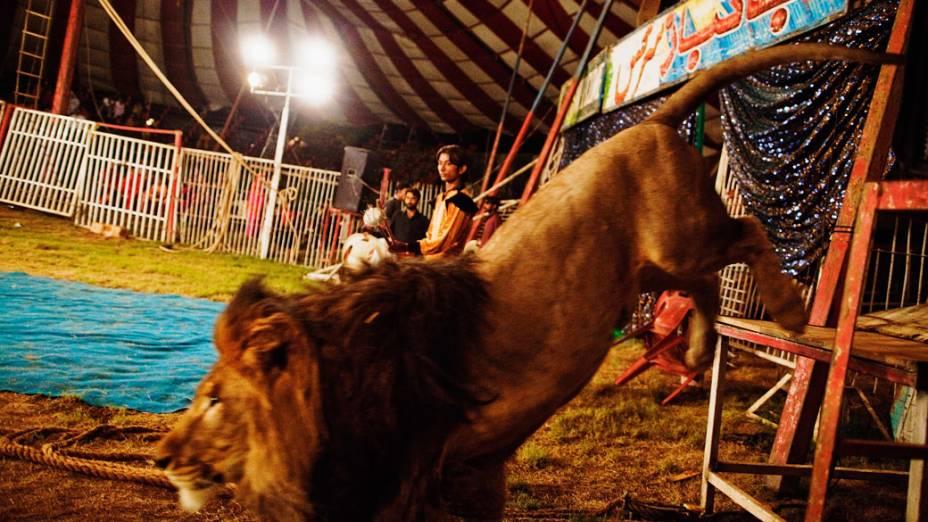 Domador da trupe do Jan Baz Circus libera o leão para o seu show