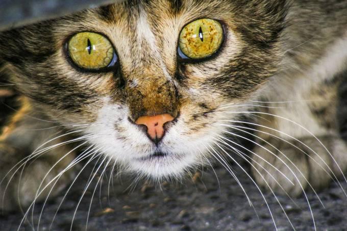 Lista comportamento dos gatos