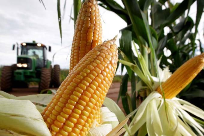 luiz-eduardo-magalhaes-bahia-milho-agricultura-20110207-01-original.jpeg