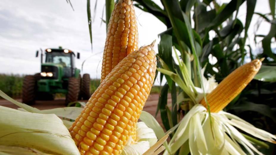 Plantação de milho na cidade de Luis Eduardo Magalhães, Bahia