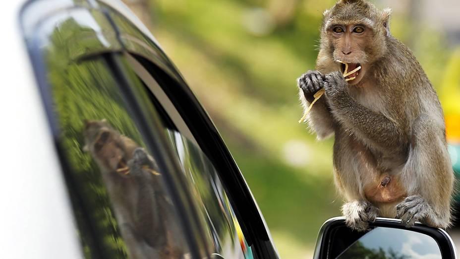 Turista dá comida a macaco que subiu em seu carro na província de Chonburi, Tailândia