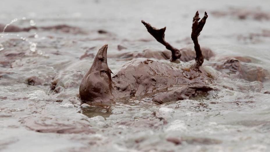 Em junho, o óleo que vazou da plataforma da petrolífera British Petroleum, no Golfo do México, chegou ao santuário de pelicanos no estado da Louisiania, no sul dos Estados Unidos, matando dezenas de animais