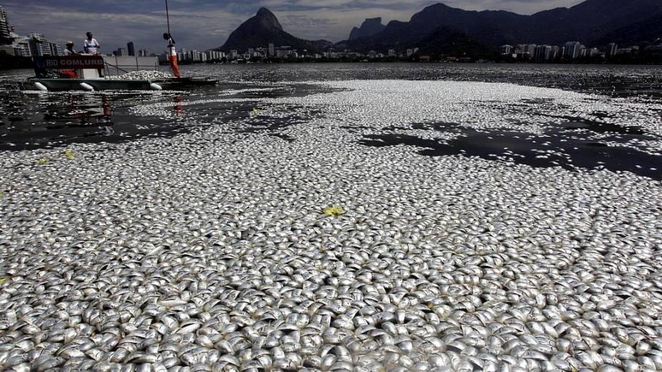 Mortandade de peixes aumenta na Lagoa Rodrigo de Freitas