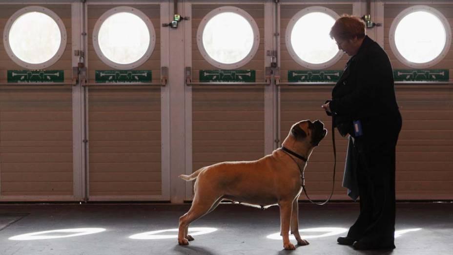 Mulher treina seu cão durante o segundo dia da Crufts, mostra anual de cães de raça em Birmingham, Inglaterra